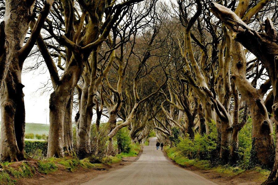 Ireland Itinerary Dark Hedges-2