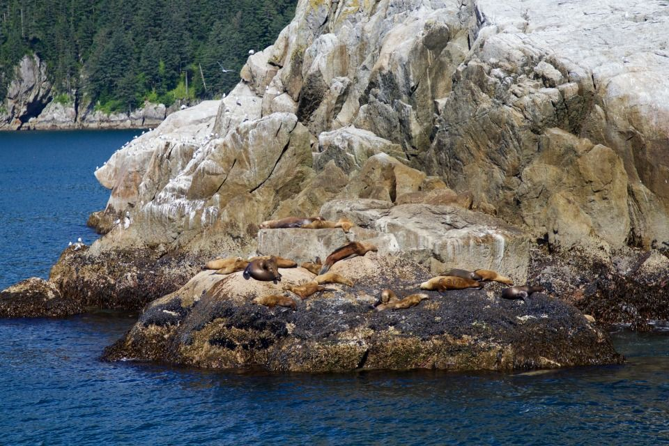 Alaska summer trip seal rock