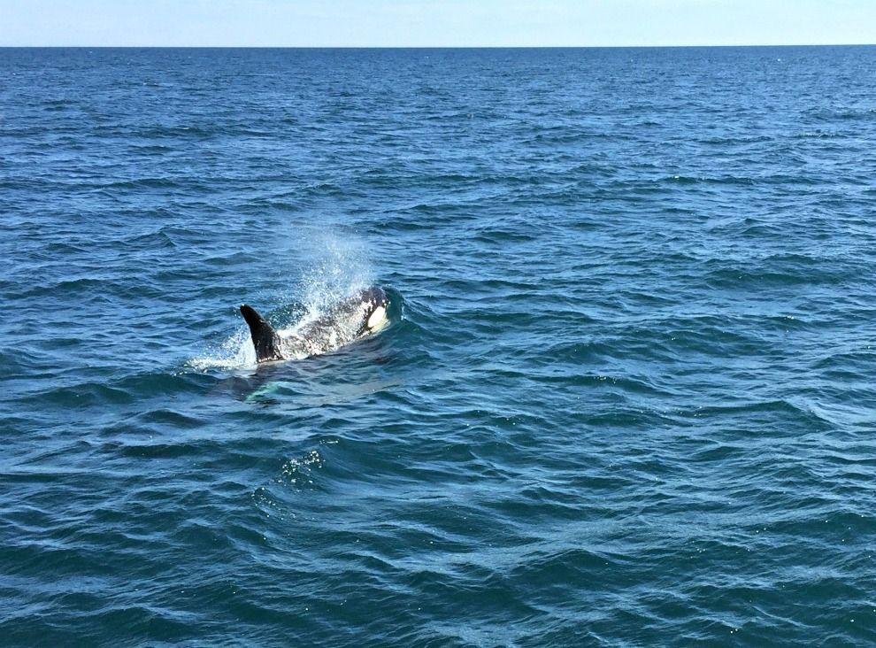 Alaska Itinerary whale watching