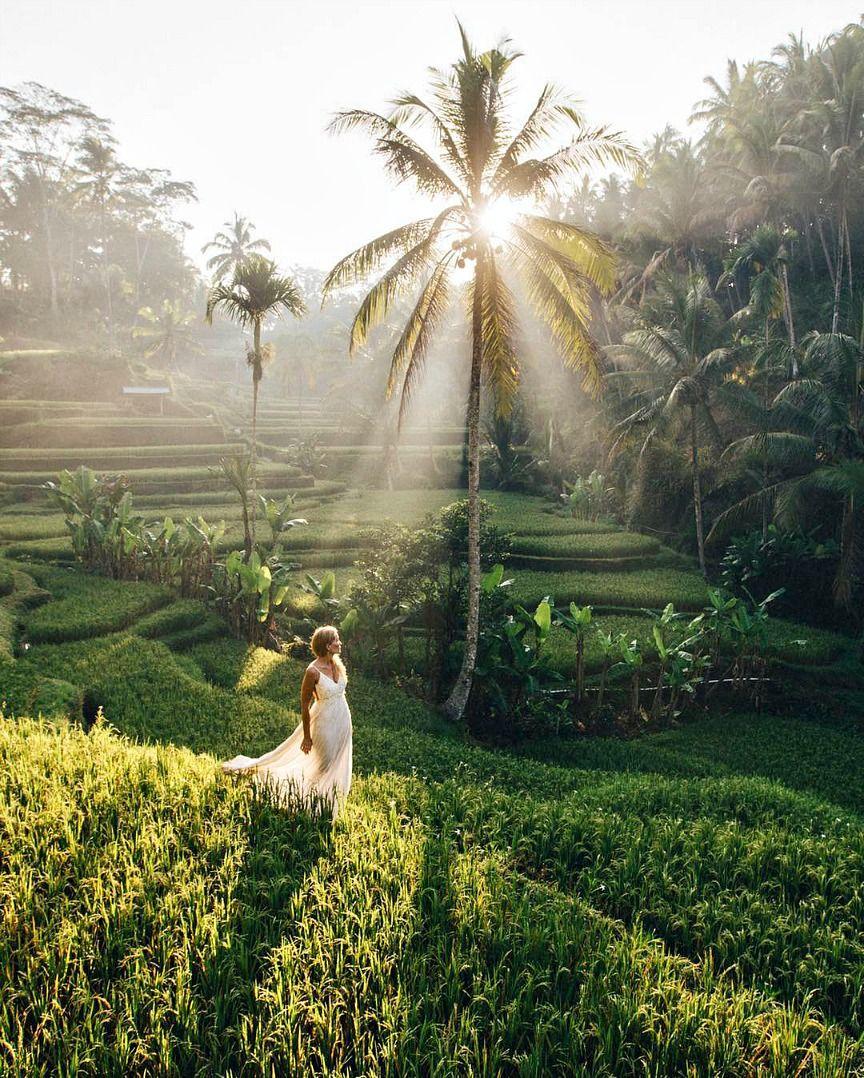 Bali instagram Spots Tegalalang Rice Terrace