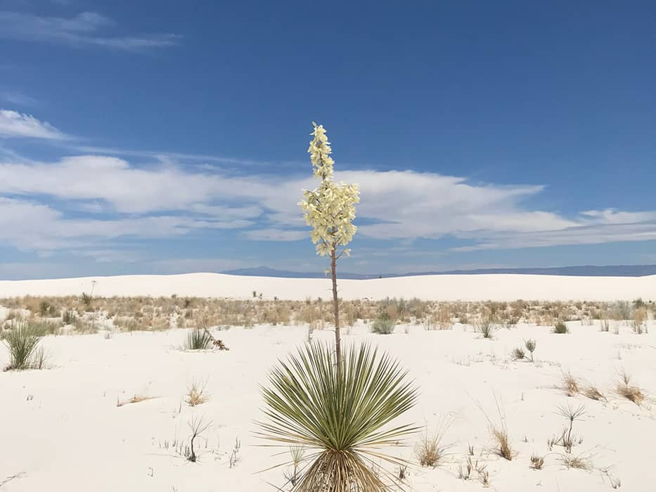 White Sands New Mexico October