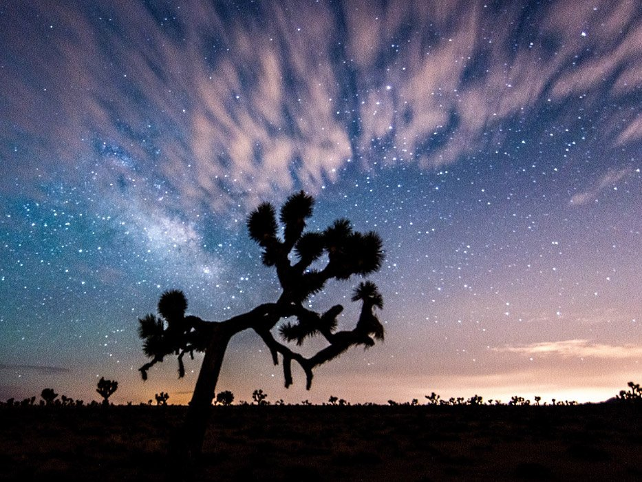 Joshua Tree Best Places to Travel in November