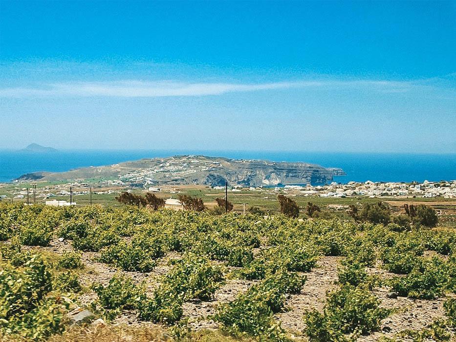 Santorini Itinerary Wine Tasting