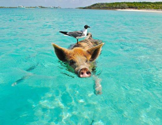 Things to do in Exuma Bahamas