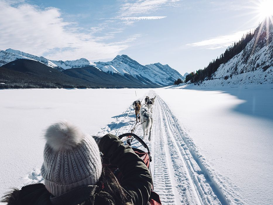 Banff in Winter Dogsledding