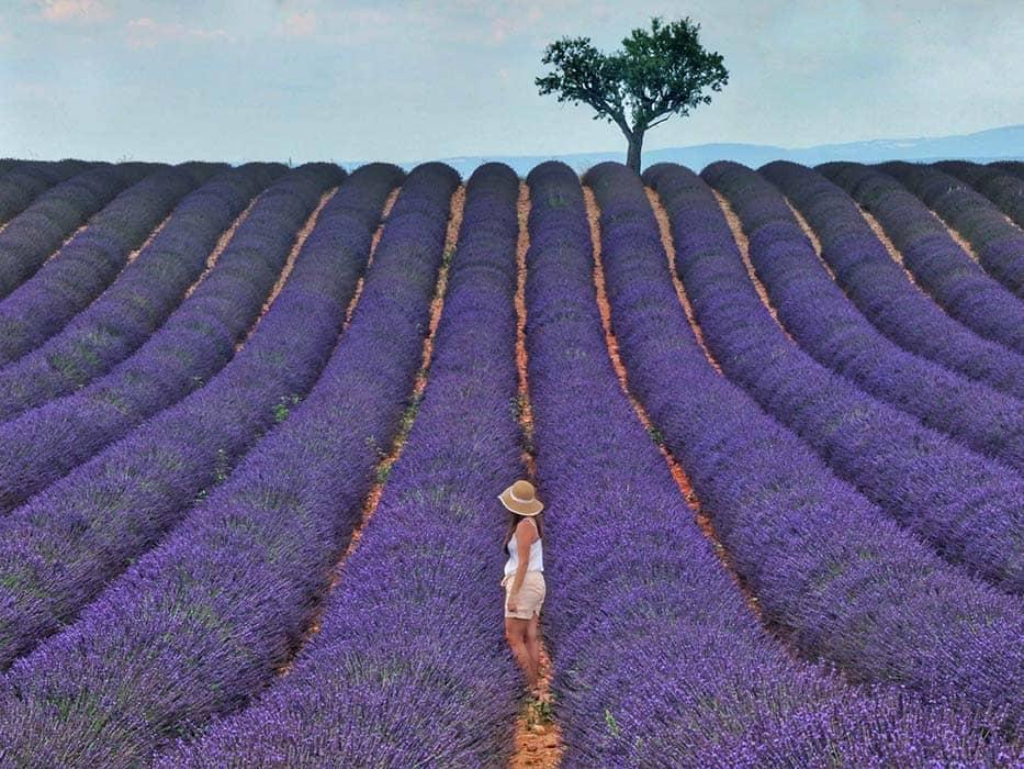 Lavender Field Provence Europe Bucket List