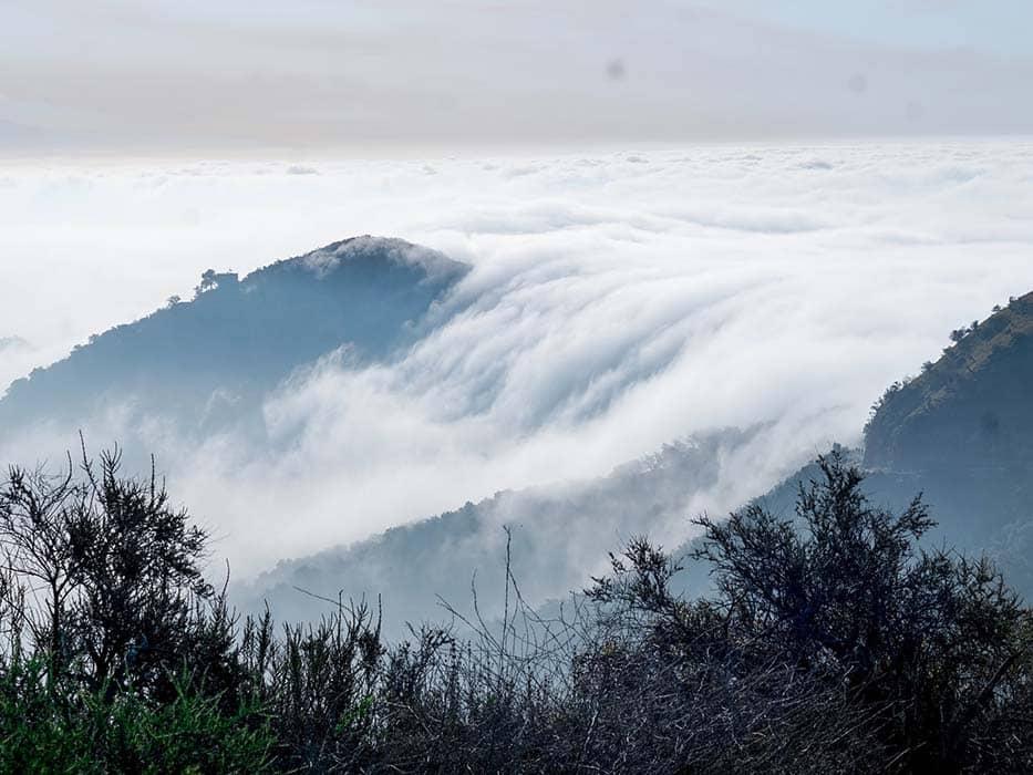 Los Angeles Fog