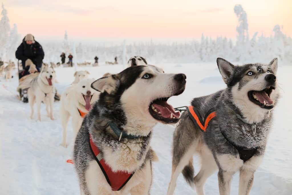 Finland Dog Sledding Europe Bucket List